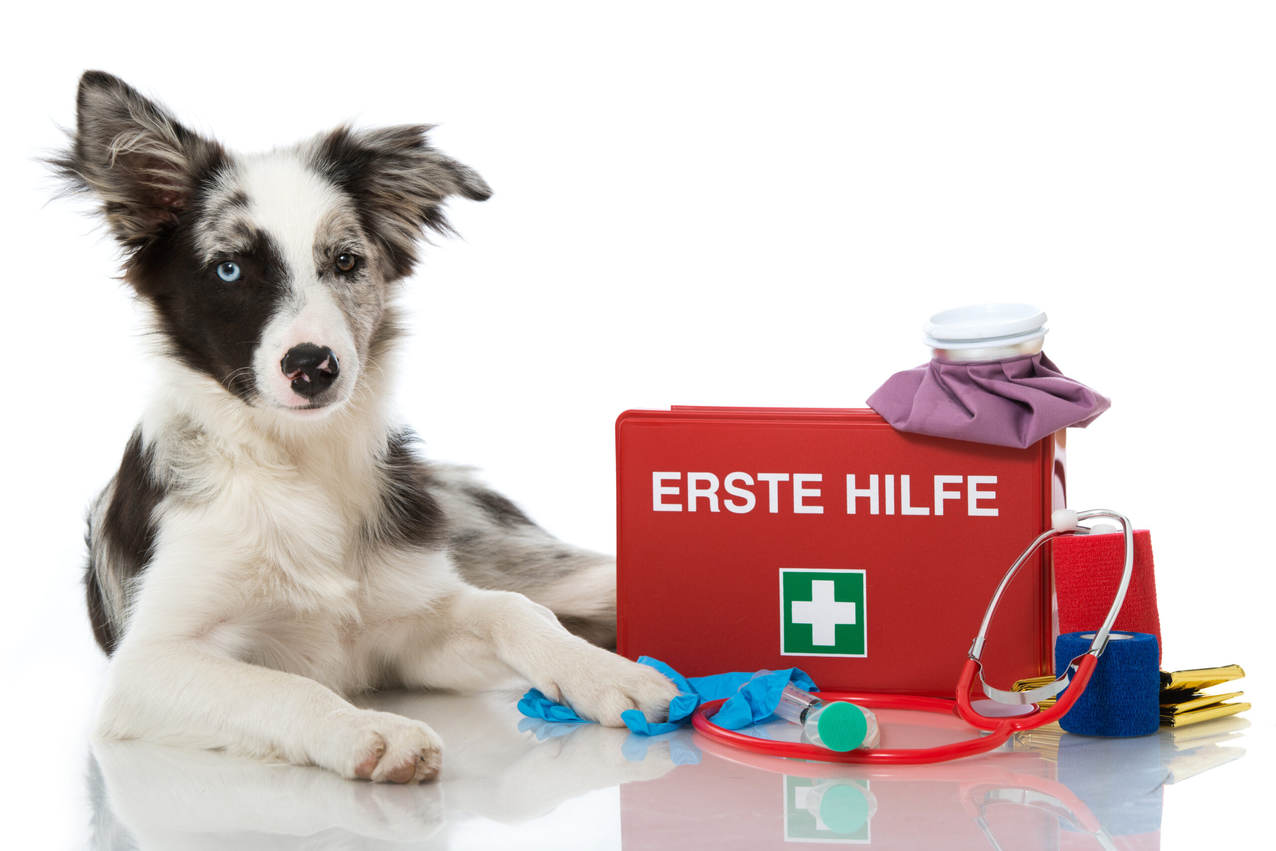 Erste- Hilfe- Kurs für Hunde post thumbnail